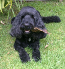 Its Lunch time for Ralph the BlackDog